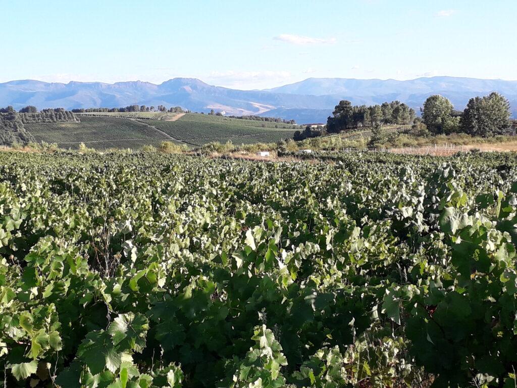 Vineyards in El Bierzo Spain is Music